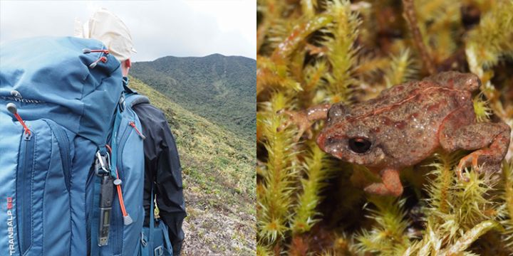 Aiding Scientific Research: Discovering New Species